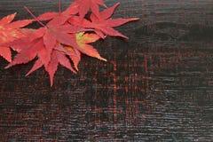 Hojas del rojo en un fondo de madera Fotos de archivo libres de regalías