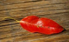 Hojas del rojo puestas en la tabla de madera fotografía de archivo libre de regalías