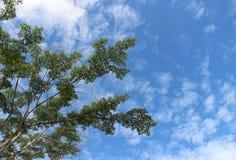 Hojas del ` s del árbol en el bosque fotografía de archivo libre de regalías