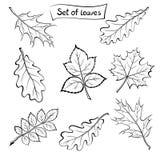 Hojas del sistema del pictograma de las plantas Imagen de archivo