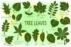 Hojas del sistema del pictograma de las plantas