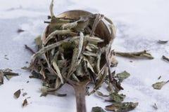 Hojas del té blanco en una cuchara en un fondo blanco Té en una cuchara antigua fotos de archivo