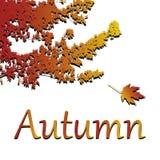 Hojas del vector Ejemplo del otoño en el fondo blanco ilustración del vector