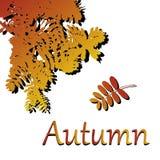 Hojas del vector Ejemplo del otoño en el fondo blanco libre illustration