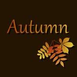 Hojas del vector Ejemplo del otoño en fondo marrón libre illustration