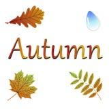 Hojas del vector Ilustración del otoño ilustración del vector