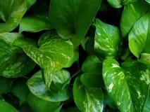 hojas del verde Imagen de archivo libre de regalías