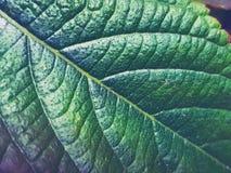 hojas del verde fotos de archivo