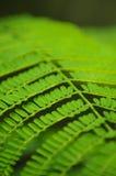 Hojas del verde Imagenes de archivo