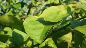 hojas del verde Fotografía de archivo libre de regalías