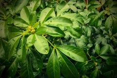 hojas del verde foto de archivo libre de regalías