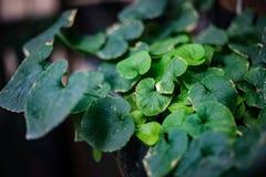 hojas del verde Foto de archivo