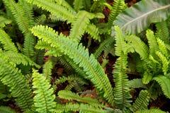 hojas del verde Fotos de archivo libres de regalías