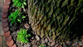 Hojas del verde alrededor del árbol almacen de video