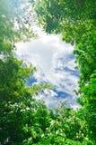 Hojas del verde con el cielo imagen de archivo libre de regalías
