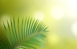 Hojas del verde con el fondo natural Fotos de archivo
