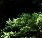 Hojas del verde con el fondo negro Imagen de archivo