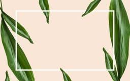 Hojas del verde con el marco rectangular sobre beige Fotografía de archivo libre de regalías