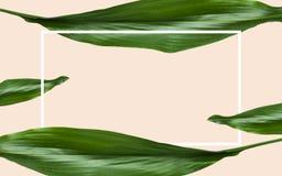 Hojas del verde con el marco rectangular sobre beige Imágenes de archivo libres de regalías