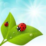 Hojas del verde con la mariquita en fondo soleado stock de ilustración