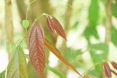 Hojas del verde con luz del sol Imagen de archivo libre de regalías