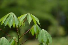 Hojas del verde con luz del sol Fotos de archivo libres de regalías
