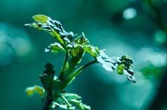 Hojas del verde con sol Fotos de archivo