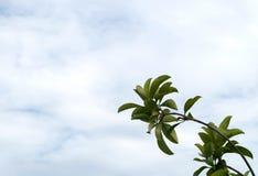 Hojas del verde contra el cielo Imagen de archivo