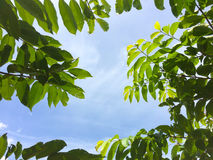 Hojas del verde contra el cielo Fotos de archivo