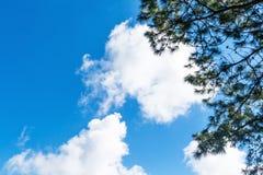 Hojas del verde contra el cielo azul Imágenes de archivo libres de regalías