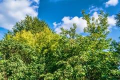 Hojas del verde contra el cielo azul Imagen de archivo libre de regalías