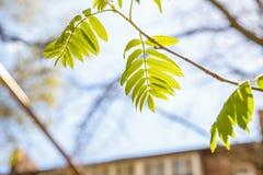 Hojas del verde contra el cielo el día soleado Imágenes de archivo libres de regalías