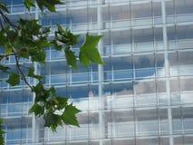 Hojas del verde contra una fachada de cristal moderna Imagen de archivo