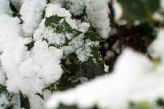Hojas del verde cubiertas en nieve Imagenes de archivo