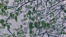 Hojas del verde de castañas en la nieve metrajes