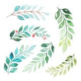 Hojas del verde de la acuarela fijadas Imagen de archivo