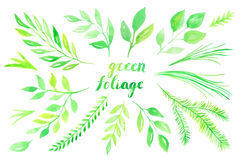 Hojas del verde de la acuarela fijadas Fotos de archivo libres de regalías