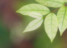 Hojas del verde de la naturaleza del fondo imagenes de archivo