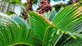 Hojas del verde de la palma Foto de archivo libre de regalías