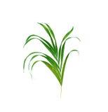 Hojas del verde de la palmera fotos de archivo