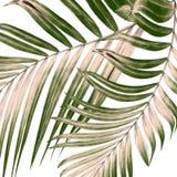 Hojas del verde de la palmera en blanco Imágenes de archivo libres de regalías