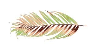 Hojas del verde de la palmera en el fondo blanco fotos de archivo