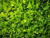 Hojas del verde de la pared Fotografía de archivo