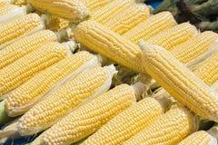 Hojas del verde de la pizca de las mazorcas de maíz fotos de archivo