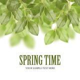 Hojas del verde de la primavera Imagen de archivo libre de regalías