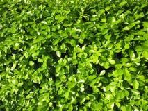 Hojas del verde de la primavera en abril Imagen de archivo libre de regalías