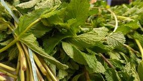 Hojas del verde de la verdura Foto de archivo libre de regalías