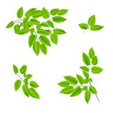 Hojas del verde de un árbol Imágenes de archivo libres de regalías