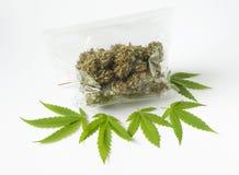 Hojas del verde del bolso de la dosis de la medicina del marijunana del cáñamo Imagenes de archivo