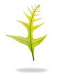 Hojas del verde del helecho Imagen de archivo